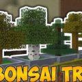 Bonsai Trees - искусство Бонсай