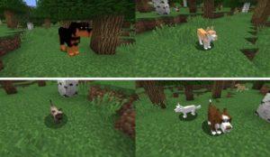 Pet Craft новые домашние животные