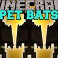 Pet Bat летучая мышь в качестве питомца