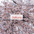 Sakura новые биомы, мобы и оружие в Японском стиле