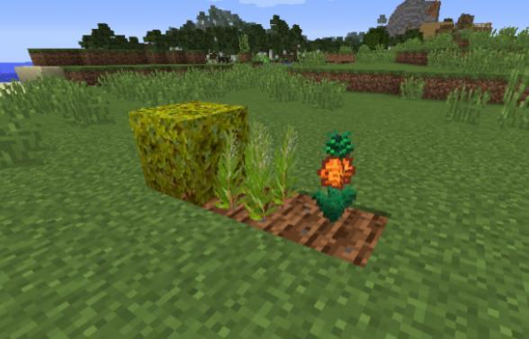 Star Crop новые сельскохозяйственные растения